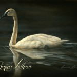 Pearl - Trumpeter Swan, watercolor on board, Bonnie Latham