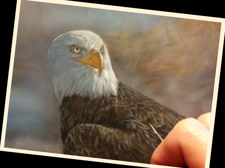 Eagle in progress