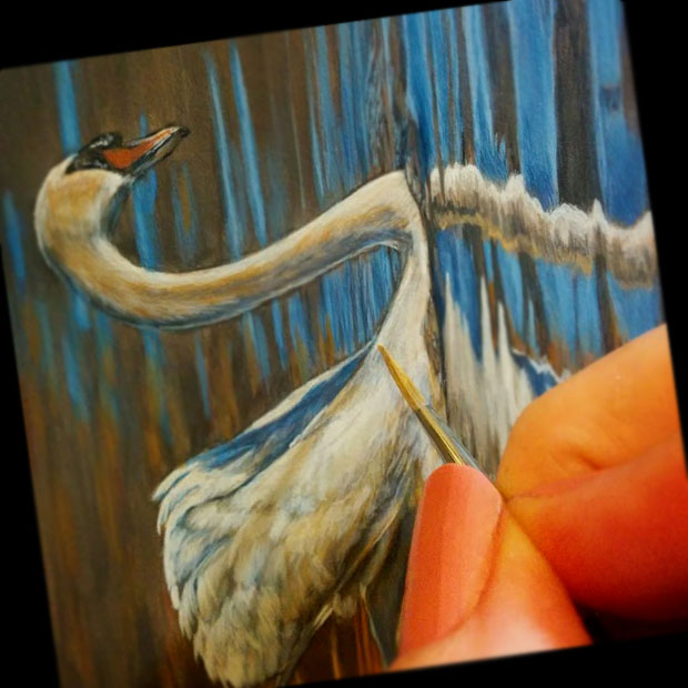 Mute Swan In Progress