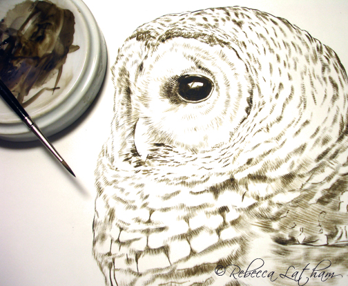 Barred Owl Sepia in progress, Rebecca Latham