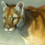 Concentration - Cougar, 12 in x 15 in, ©Rebecca Latham, watercolor on board