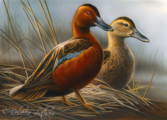 Water's Edge - Cinnamon Teal, 8in x 10in, watercolor on board, ©Rebecca Latham