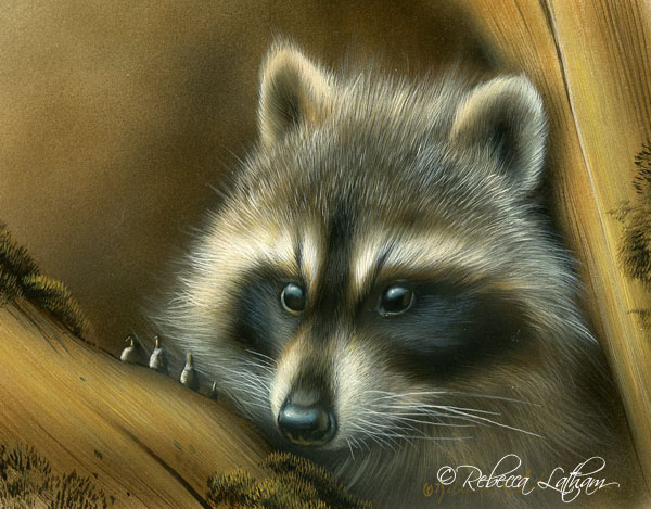 Comfy Spot - Raccoon, 5in x 7in watercolor on board with sterling silver