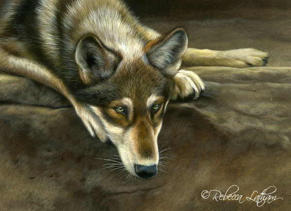 RLwolf13137 Resting on the Ledge - Young Wolf, 6in x 8in watercolor on board with sterling silver