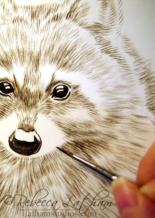 "Detail of a Raccoon in Progress, 8"" x 10"", Sepia watercolor on board, ©Rebecca Latham"