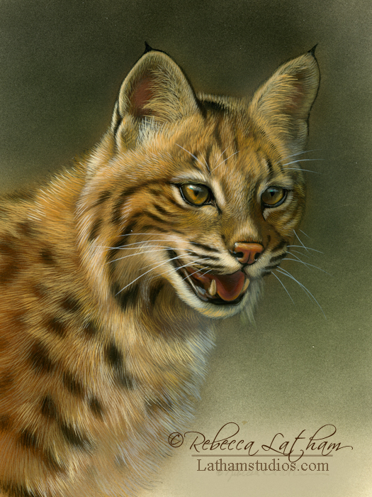 Bobcat, watercolor and sterling silver on board, ©Rebecca Latham