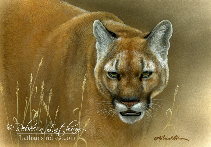 Cougar, watercolor and sterling silver on board, ©Rebecca Latham