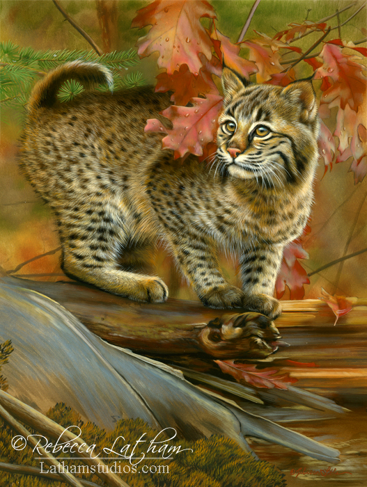 Autumn Curiosity - Bobcat, Opaque and Transparent Watercolor with Sterling Silver and 24kt Gold on Board, 9in x 12in, ©Rebecca Latham
