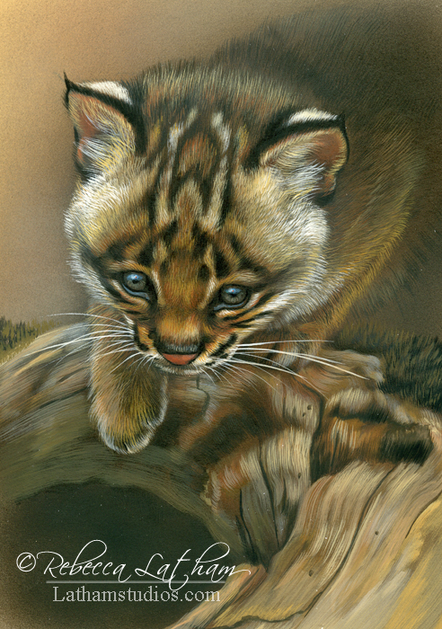 Just Missed - Bobcat Kitten, 5in x 7in, watercolor on board with sterling silver, ©Rebecca Latham