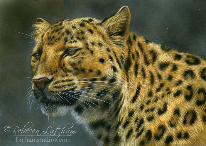 leopard, 5in x 7in, opaque and transparent watercolor with sterling silver and 24kt gold on board, ©Rebecca Latham