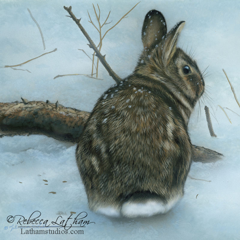 Evening Snow - Rabbit, 8in x 8in, opaque and transparent watercolor with sterling silver on board, ©Rebecca Latham