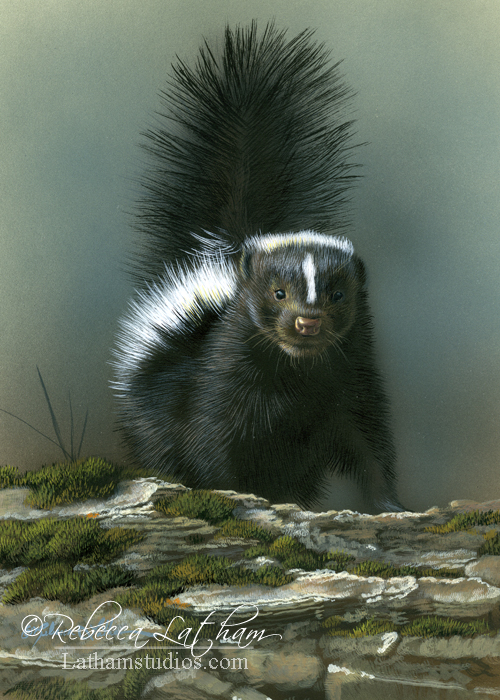 Skunk, 5in x 7in, opaque and transparent watercolor with sterling silver and 24kt gold on board, ©Rebecca Latham