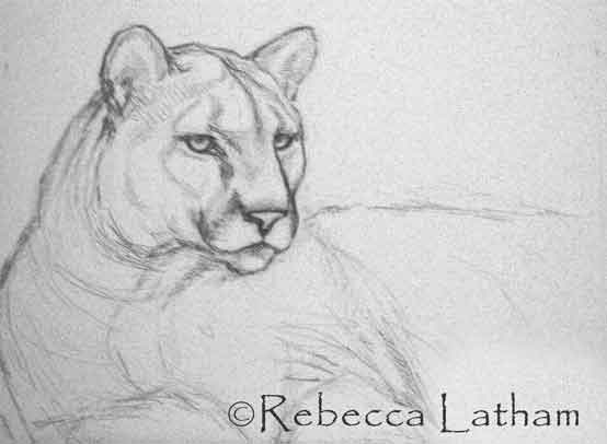 Starting Cougar Painting Sketch Phase Paintings Of