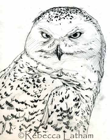 Snowy Owl Sketch Paintings of Wildlife Nature by Rebecca Latham