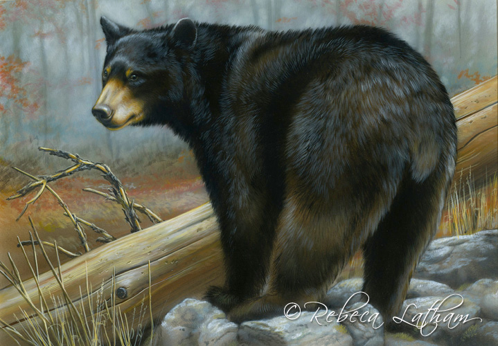 Maryland Black Bear Conservation Stamp   Paintings of Wildlife ...