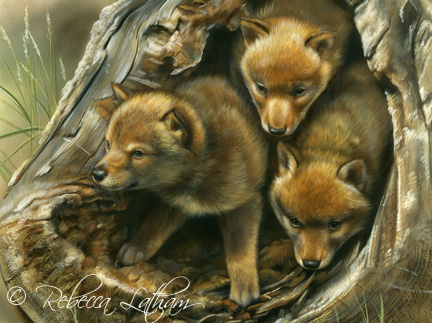 Coyote Puppies Paintings Of Wildlife Amp Nature By Rebecca