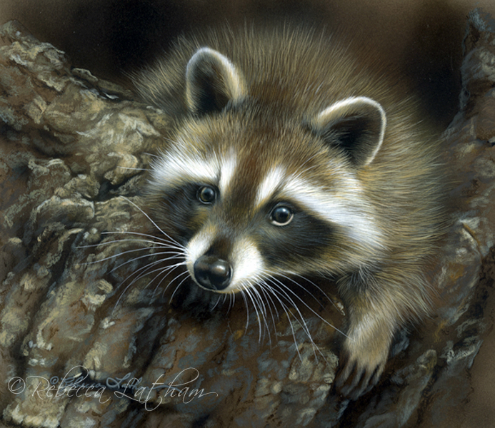 Raccoon Painting Framed | Paintings of Wildlife & Nature ... Raccoon Painting