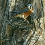 Raptor (kestrel) Featured painting, realistic fine art of wildlife painted in miniature.