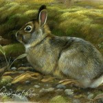 Rabbit Featured painting, realistic fine art of wildlife painted in miniature.