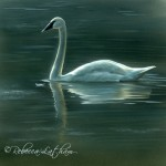 Evening in Indigo – Trumpeter Swan | Wildlife art and nature paintings of Latham Studios, a family of artists.