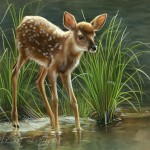 Deer. Featured painting, realistic fine art of wildlife painted in miniature.