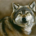Wolf Portrait. Featured painting, Realistic fine art of wildlife painted in miniature.