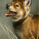 Wolf Puppy. Featured painting, realistic fine art of wildlife painted in miniature.