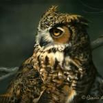 NightOwl4web