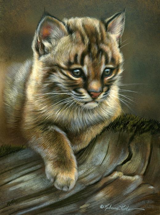 quiet spot  u2013 bobcat kitten  5 u2033 x 7 u2033  watercolor on board