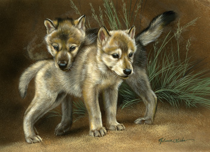 wolf puppies  watercolor on board   u00a9rebecca latham